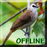 Kicau Burung Trucukan Gacor APK