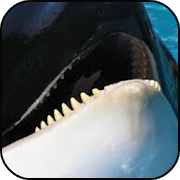 Whales Wallpaper 2.1 Android Latest Version Download