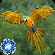 Parrot Bird Wallpaper APK