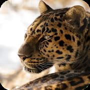 Leopard Wallpapers APK