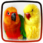 Parrot Live Wallpaper APK