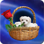 Cute Puppy Wallpapers HD APK