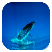 Blue Whale Video Live Wallpaper 2.1 Android Latest Version Download