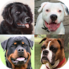 Dogs Quiz - Guess Popular Dog Breeds on the Photos APK
