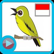 Suara Kicau Burung Full Mp3 Lengkap APK