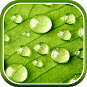 Spring Live Wallpaper HD APK