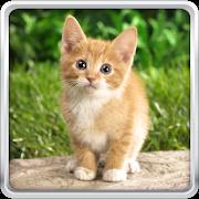 Cat Kittens Live Wallpaper APK