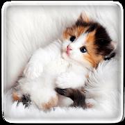 Cat Live Wallpaper APK