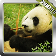 Panda Animated Wallpaper APK