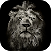 Lion King CM Locker Cool Theme APK