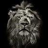Lion King CM Locker Cool Theme APK