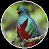 iMonteverde - Costa Rica APK