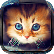 Cute Cats Live Wallpaper APK