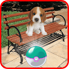 Pocket Puppy Pet Go! APK