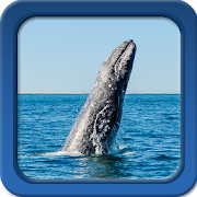 Whale Live Wallpapers 1.5 Android Latest Version Download
