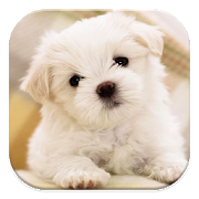 Dog Wallpaper APK