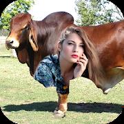 Big Animals Photo Frames Editor: New HD Cards 2017 APK