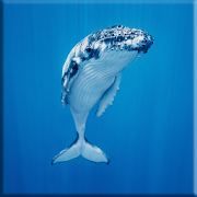 Blue Whale Lock Screen APK