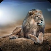 Lions HD Wallpaper APK