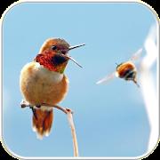 Hummingbird Wallpapers APK