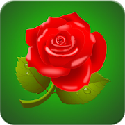 Rose Wallpaper HD APK
