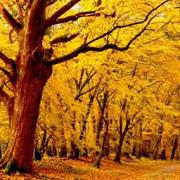 Autumn part 7 APK