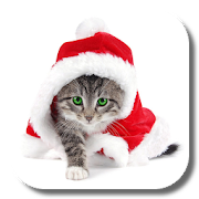 Christmas Cat Live Wallpaper APK