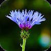 Blur Image - DSLR focus effect APK