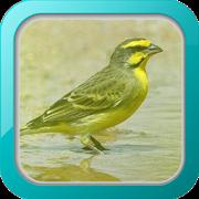 Kicau Burung Mozambik APK