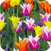 Colorful. Flower Wallpapers APK