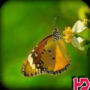 Butterfly Wallpaper HD APK