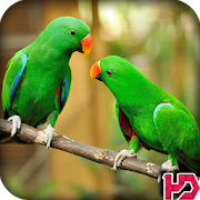 Parrot Wallpaper Hd APK