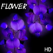 Flower HD Wallpaper APK