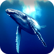 Blue Whale Simulator 2018 APK
