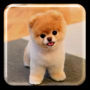 Puppy Live Wallpaper APK
