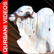 Qurbani Videos APK