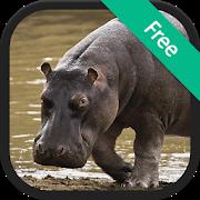 Hippopotamus Sounds APK