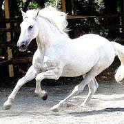 Horse Wallpapers APK