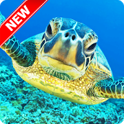 Turtle Wallpaper APK