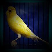 Kicau Burung Kenari mp3 Juara APK