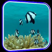 Fish HD Live Wallpaper APK