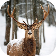 DEER Wallpapers v1 APK