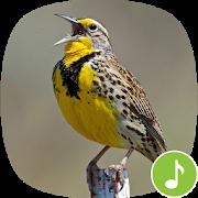 Appp.io - Meadowlark bird sounds APK