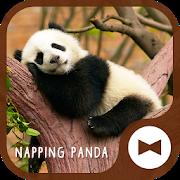 Cute Wallpaper Napping Panda Theme APK