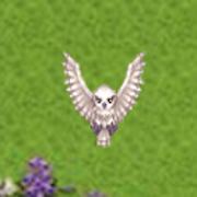 owl turn APK