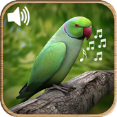 Latest Bird Ringtones 2016 Latest Version Download