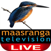 Maasranga TV Live  Latest Version Download