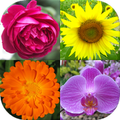 Flowers - Botanical Quiz about Beautiful Plants