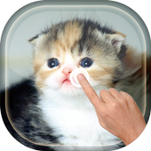 Magic Touch - Cute Cat 4.0 Android for Windows PC & Mac