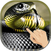 Magic Touch Cobra Attack Latest Version Download